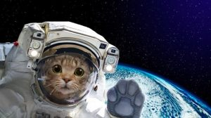 astronaut-cat